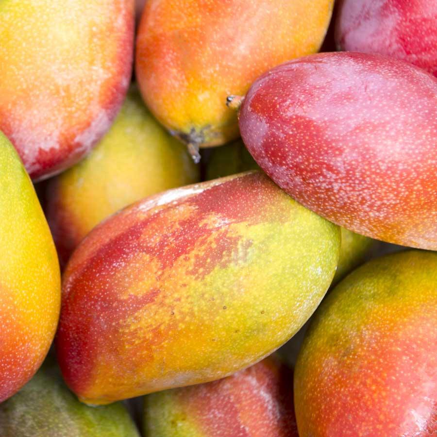Recomendaciones de Agrotrapiche para mejorar la calidad del cultivo del mango.