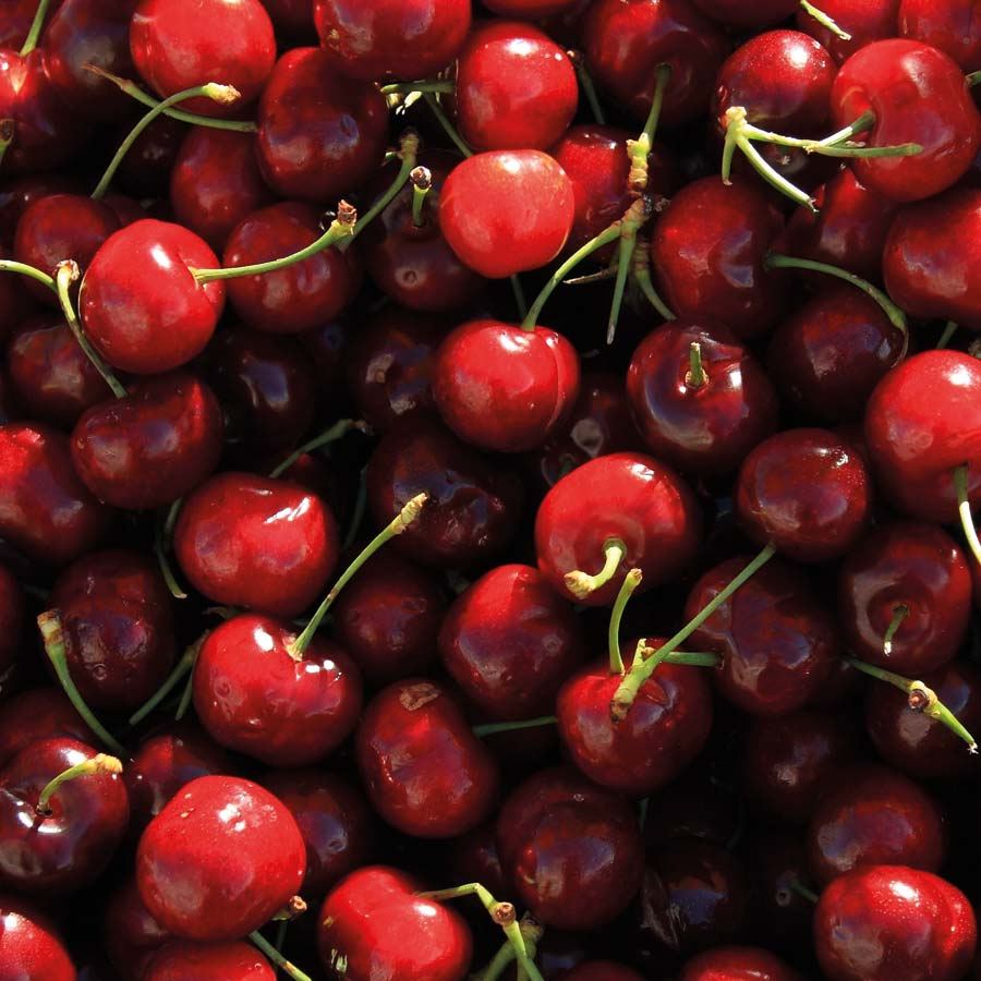 Recomendaciones de Agrotrapiche para mejorar la calidad del cultivo de frutales con hueso.