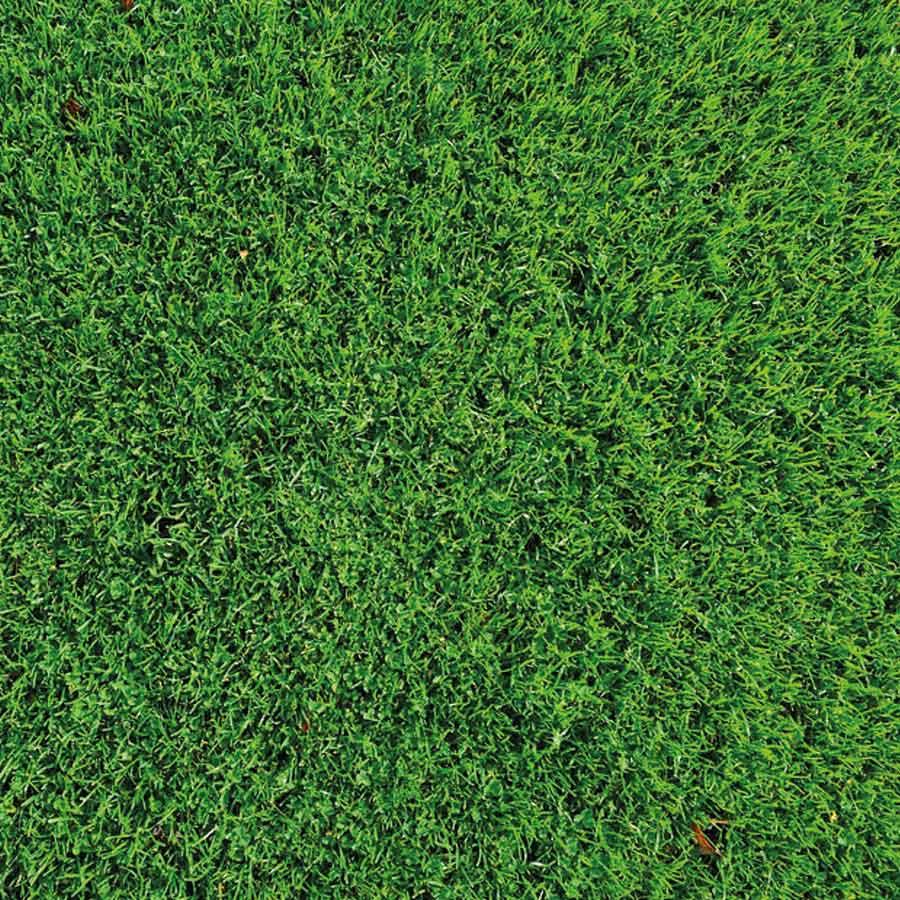Recomendaciones de Agrotrapiche para mejorar la calidad del cultivo de las áreas verdes.