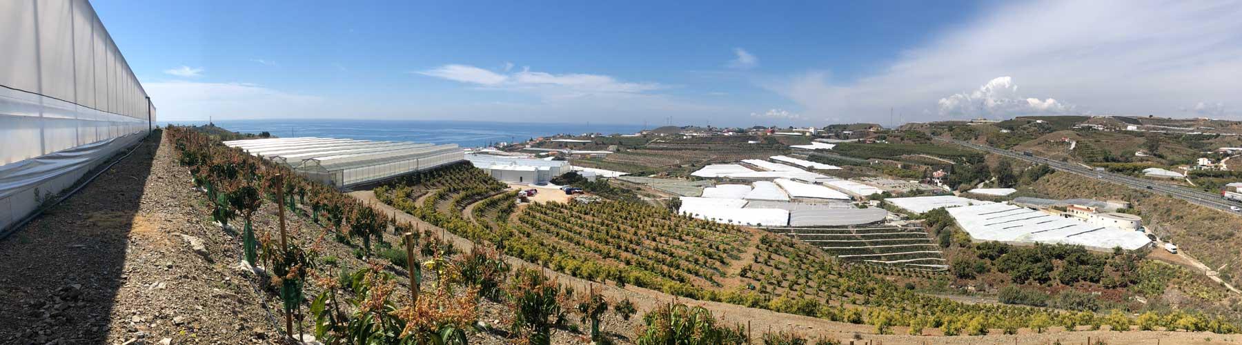 Imagen de una de las fincas de Agrotrapiche en Málaga.